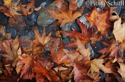 autumn-leaves-on-pavement-fiona-schiffl-2014-15