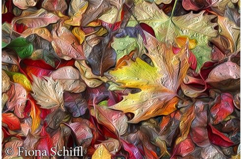 fiona-schiffl-canberra-leaves