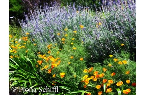 fiona-schiffl-roley-garden