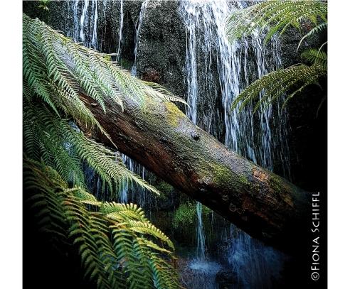Mt Buangor Victoria Fiona Schiffl